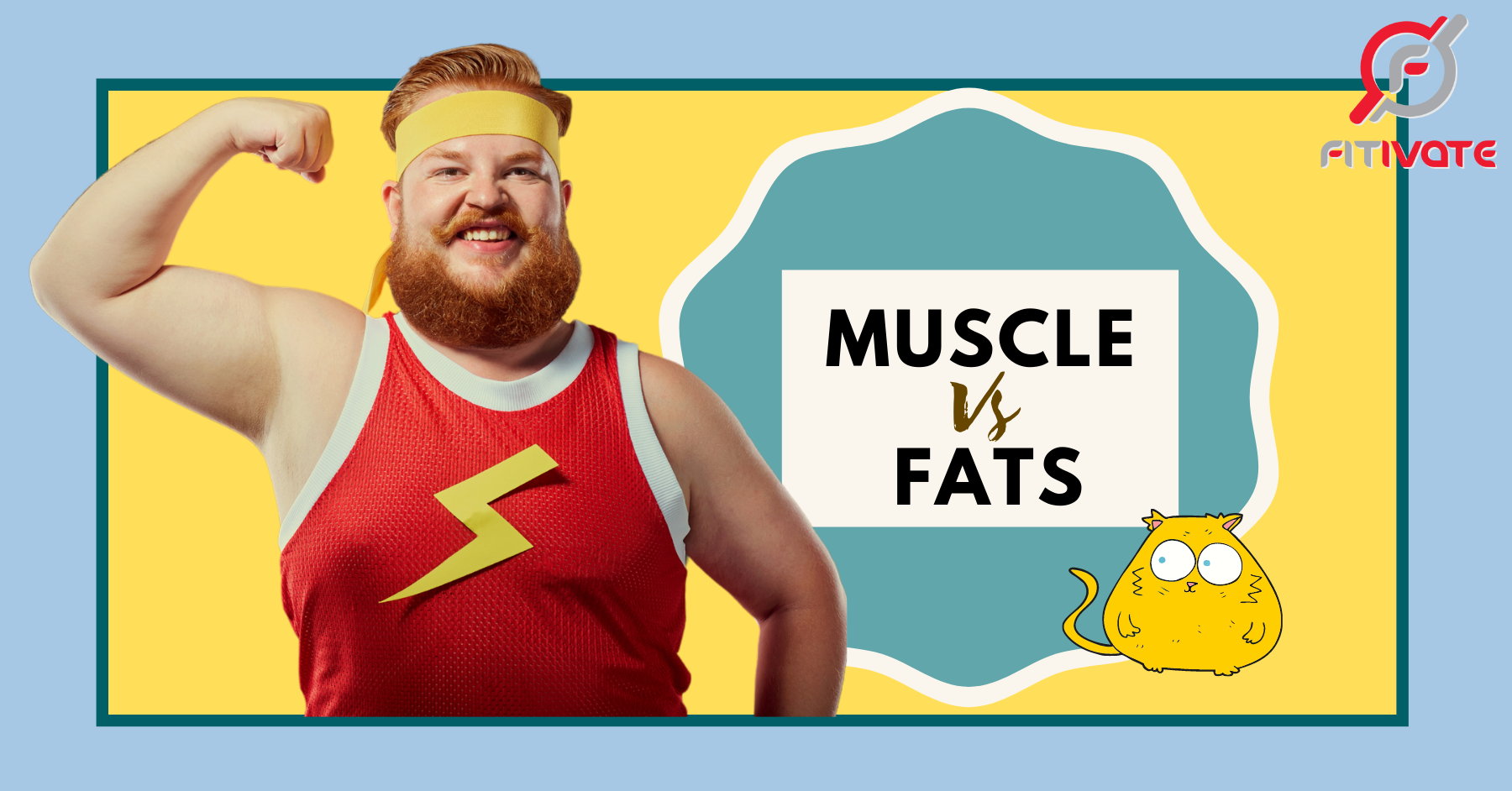 muscles and fats, muscles vs fats